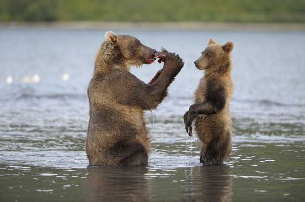 Hey. Tu me donnes du saumon, dis ? Dis ? Dis ? Hein, dis ?
